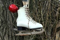 Pair of White Ice Skates hanging on the tree Stock Photography