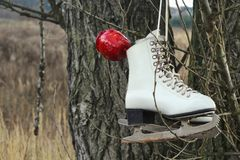 Pair of White Ice Skates hanging on the tree Royalty Free Stock Images