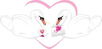 Pair of white swans with festive cards in beaks Royalty Free Stock Photo