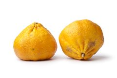 Pair of whole ugli fruit Royalty Free Stock Image