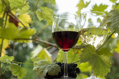 Pair of wineglasses and bunch of grapes Royalty Free Stock Photos