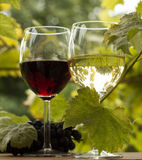 Pair of wineglasses and bunch of grapes. In garden outdoor. vintage time Royalty Free Stock Photo