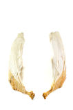 Pair of wings. Two goose wings isolated on a white background Stock Photography
