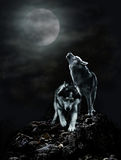 A pair of wolves on a dark night and the moon Stock Photo