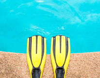 Pair of yellow fins Royalty Free Stock Images