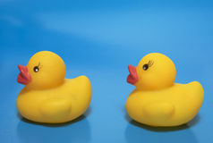 Pair yellow rubber duckling Stock Images