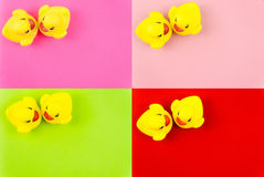 Pair of yellow rubber ducks isolated over colorful background, love concept Royalty Free Stock Image