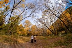 A pair of young couple walking down a track surrounded with beautiful autumn trees. A pair of young couple walking down a track surrounded with beautiful autumn royalty free stock photo