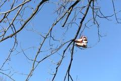 Paire de chaussures s'arrêtant sur des branchements d'arbre Photo libre de droits
