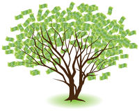 Paired Money Trees. Two money trees growing together isolated on a white background Royalty Free Stock Photography