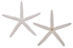 Paires d'étoiles de mer blanches Photo libre de droits