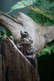 Paires d'amphibies Photo libre de droits