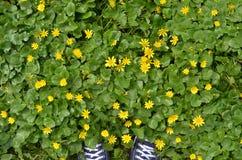 Paires d'espadrilles bleues parmi les fleurs jaunes Photos libres de droits