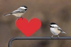Paires d'oiseaux avec le coeur image stock