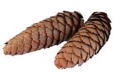 Paires de cônes tombés de pin Photos stock