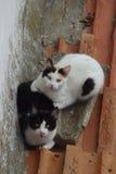 Paires de chats noirs et blancs Photographie stock libre de droits