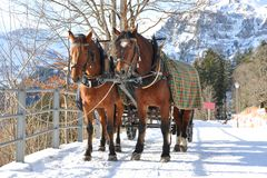 Paires de chevaux Photos stock