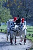 Paires de chevaux en parc d'automne Image stock