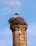 Paires de cigogne Image libre de droits