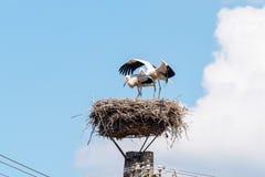 Paires de cigogne dans le nid 2 Photographie stock libre de droits