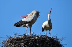 Paires de cigognes dans le nest_2 Photographie stock libre de droits