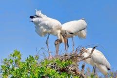 Paires de cigognes en bois sur un nid photo libre de droits
