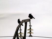 Paires de corneilles sur une tour électrique image libre de droits