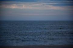 Paires de dauphins dans l'océan Photos libres de droits