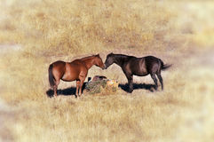 Paires de deux chevaux Images stock