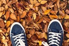 Paires de fond de chaussures de toile bleues avec les feuilles d'automne tombées Images stock