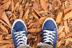 Paires de fond de chaussures de toile bleues avec les feuilles d'automne tombées Photos stock