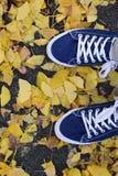 Paires de fond de chaussures de toile bleues avec les feuilles d'automne tombées Photo stock