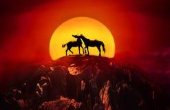 Paires de jouer de chevaux Photos libres de droits