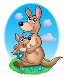 paires de kangourous d'herbe Photo stock
