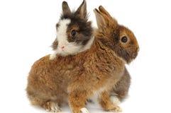 Paires de lapins Photo stock
