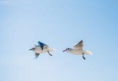 Paires de mouettes volant en ciel au-dessus des eaux de mer Image stock
