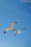 Paires de mouettes volant en ciel au-dessus des eaux de mer Photographie stock libre de droits