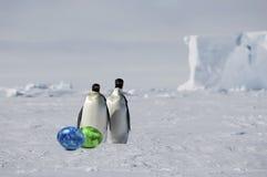 Paires de pingouin avec des oeufs de pâques Photo libre de droits