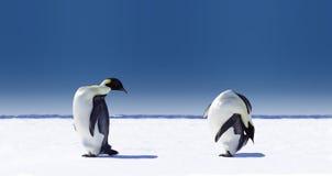 Paires de pingouins Photos stock