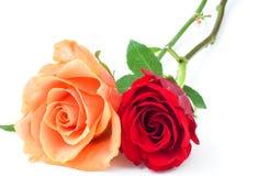 Paires de roses Photos libres de droits