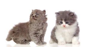 Paires gentilles de chatons gris Photos libres de droits