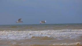 Pairo das gaivotas vídeos de arquivo