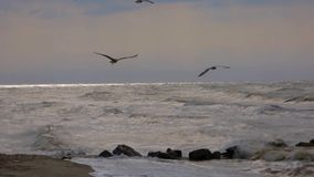 Pairo das gaivotas video estoque