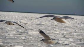 Pairo das gaivotas no ar no fundo Gelo-coberto congelado do mar Movimento lento video estoque