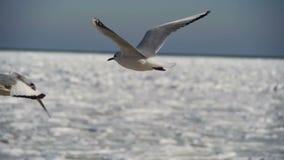 Pairo das gaivotas no ar no fundo Gelo-coberto congelado do mar Movimento lento filme