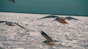Pairo das gaivotas no ar no fundo Gelo-coberto congelado do mar Movimento lento vídeos de arquivo