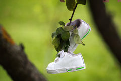 Pairs of kids sneakers hanging from a tree branch Royalty Free Stock Photo