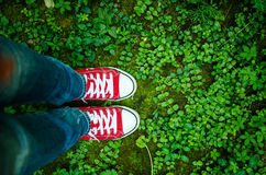 Pair of sneakers and vegetation. Red sneakers in the grass- hipster style image Stock Photo