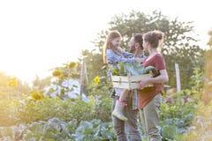 Pais que olham a filha ao andar com a caixa na exploração agrícola fotos de stock royalty free