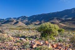 Paisagem árida do deserto fotografia de stock royalty free